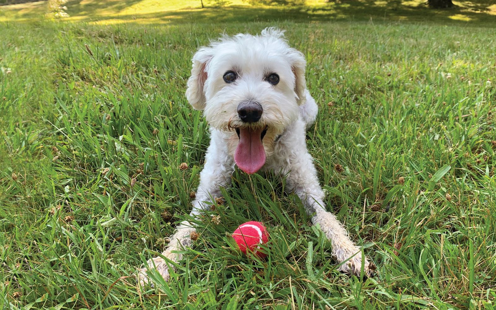 Schnoodle Toy - Lifestyle