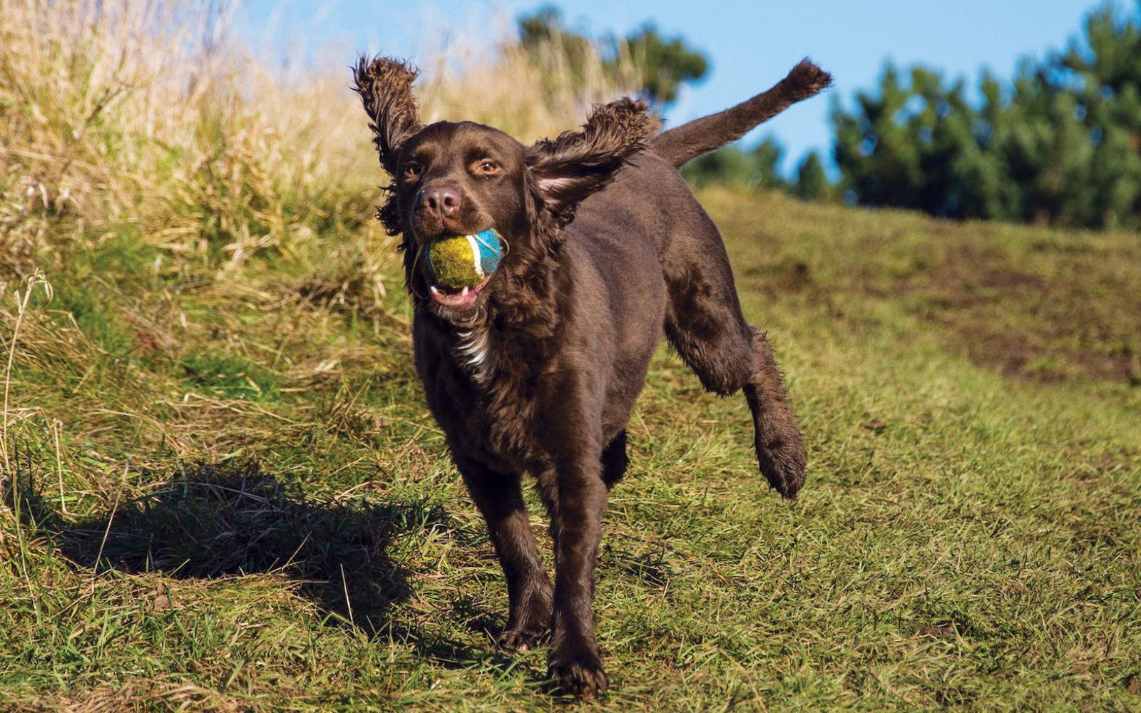Sprocker - Lifestyle